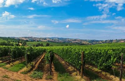 tuscany wineries